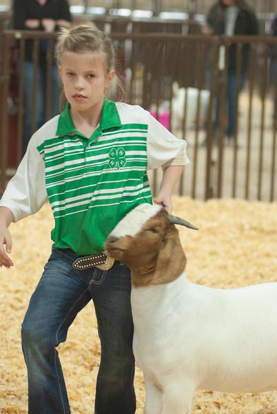 kay_county_showdown_goats_20191207-177.jpg