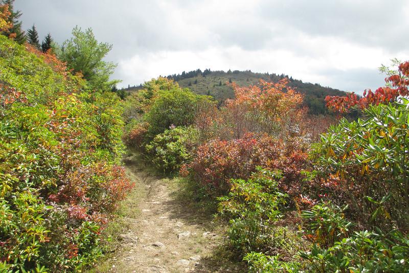 Ivestor Gap Trail -- 5,700'