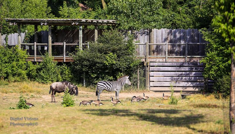 2016-07-17 Fort Wayne Zoo 161LR.jpg