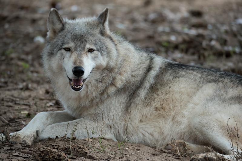 Seacrest Wolves_-81.jpg