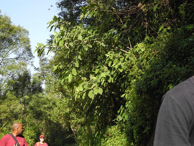 india2011 417.jpg