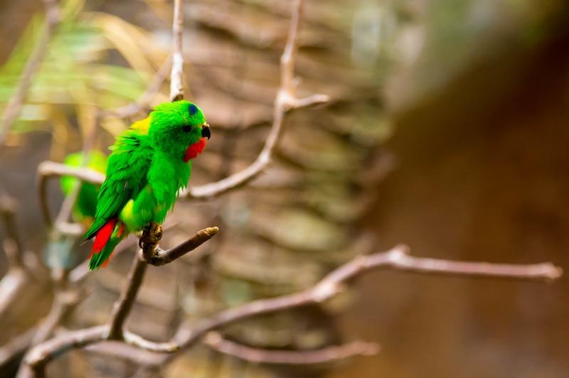 Little green bird