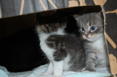 2012-05-29, Kittens