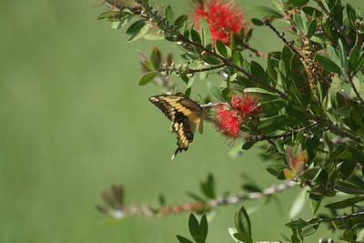 Butterflies, Moths & Dragonflies
