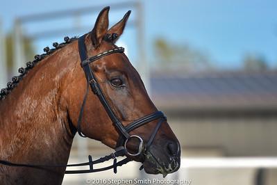 2016 Horse Trials