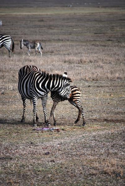 Ngorongoro (5).JPG