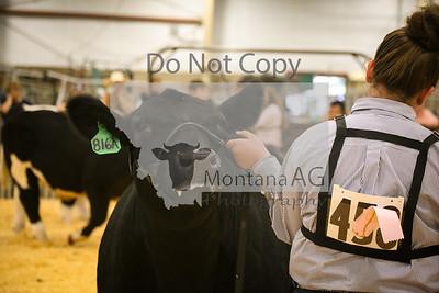 Steer Showmanship