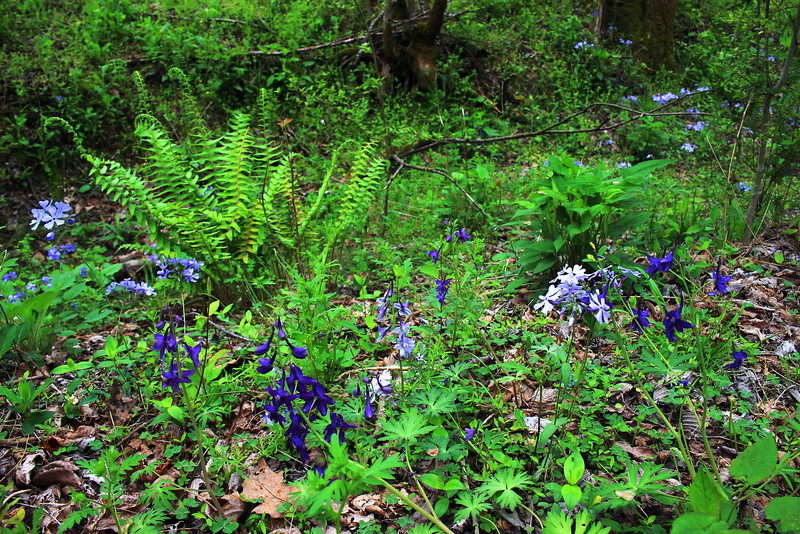 Ferns and wildflowers.jpg