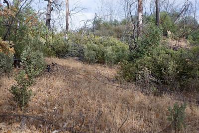 C0855 Arctostaphylos TBD Blue Ridge/Hobbs