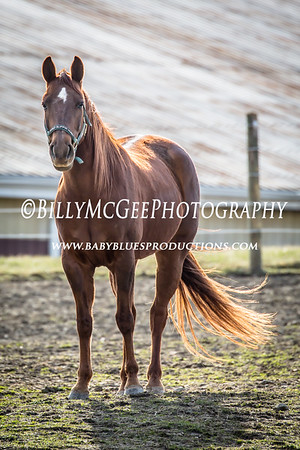 Horses Grazing at Sunset - 02 Apr 2015