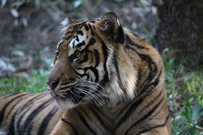 SD Wild Animal Park 2019-11-18