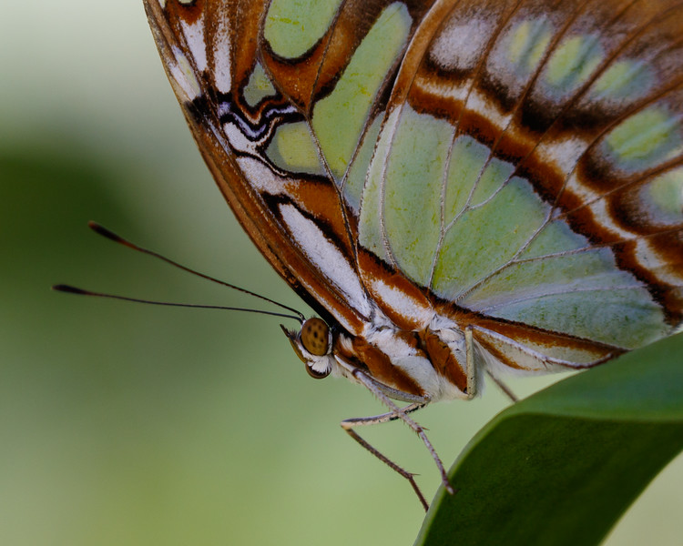 Butterfly World-7644.jpg