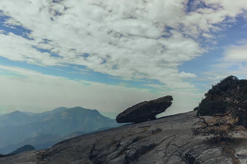 Rui in Sequoia-07068.jpg