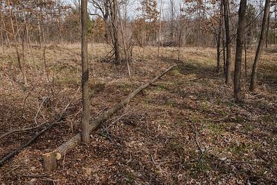 11.0 East Woods General