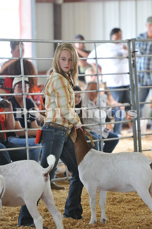 Goat and Steer Show