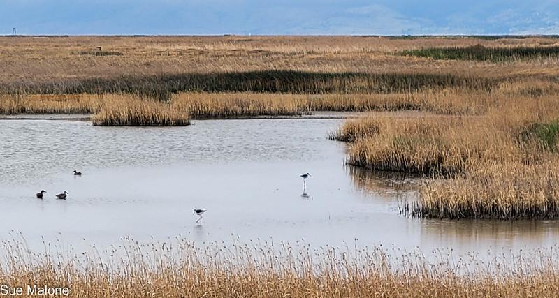 05-19-2021 Summer Lake Wildlife Refuge-20.jpg