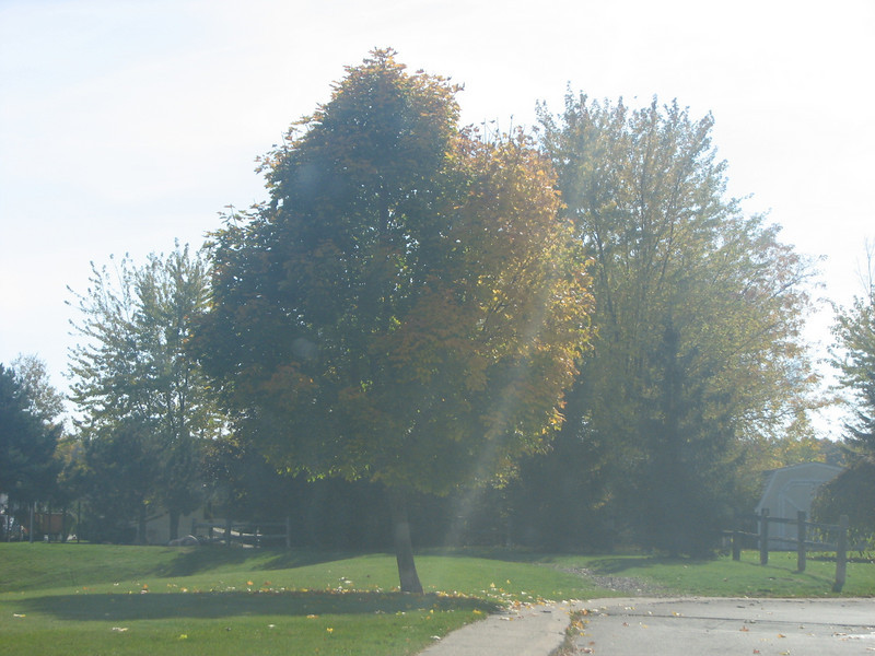 Fall pics 2008 007.jpg