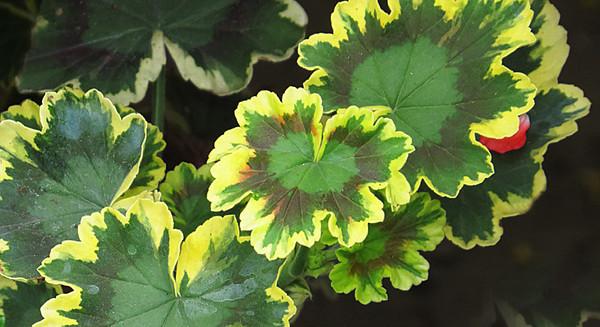 Plants for all Seasons nursery