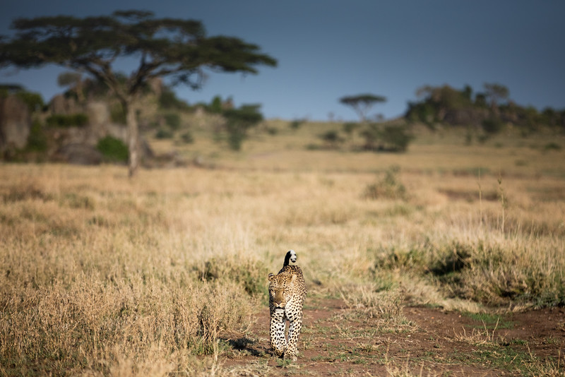 Africa - 101616 - 3748.jpg