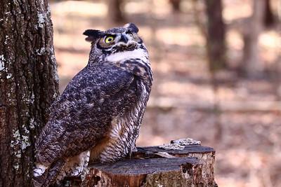2010 Birds of Prey - Raptors
