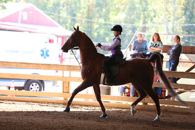 27) Academy W/T Showmanship 11-12 year olds