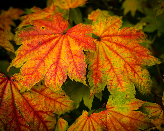 Autumn Colour Gallery