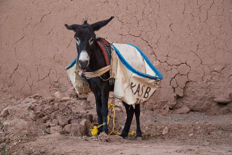 160925-125809-Morocco-0583.jpg