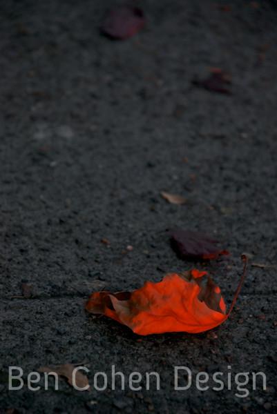 Red Leaf_filtered.jpg