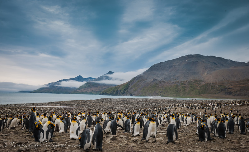 Antarctic-162