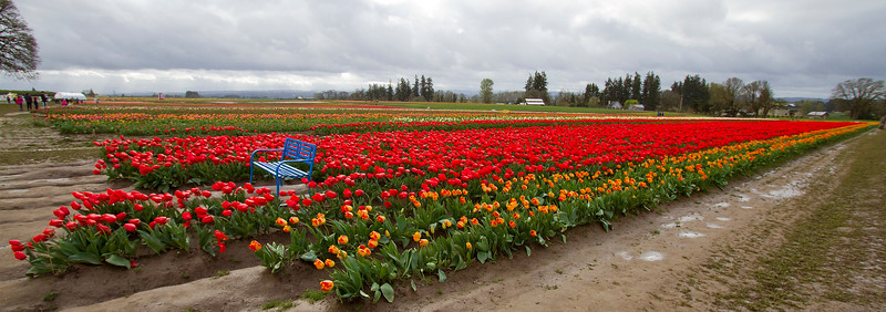 The Wooden Shoe Tulip Festival