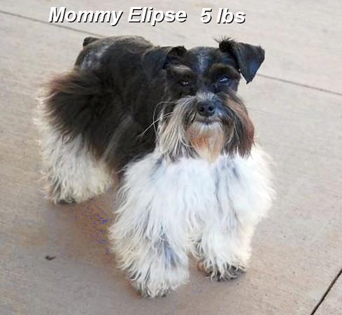 Teddy Mom Elipse.jpg