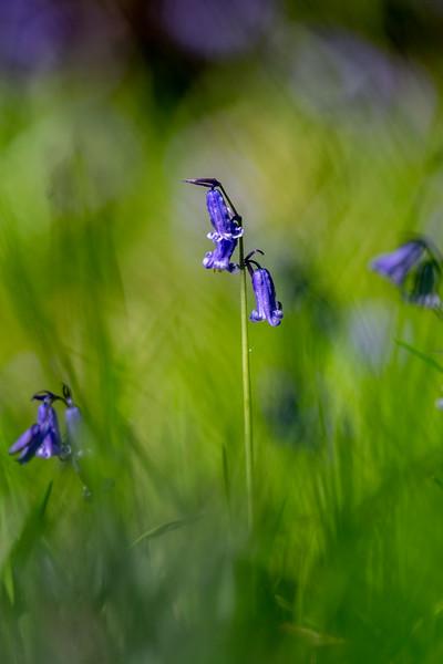 Ebernoe Common-11.jpg