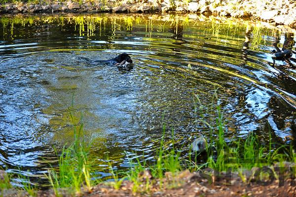 Gauge (pond)