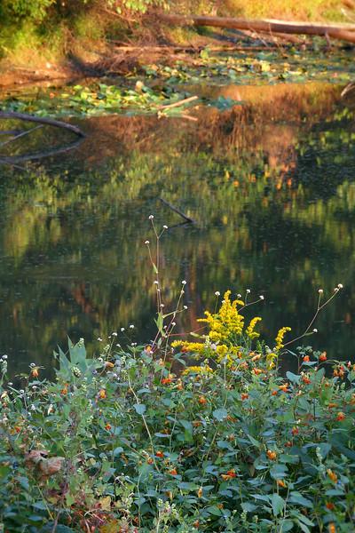 September reflections