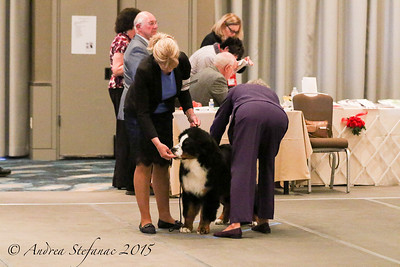 Sweeps 6-9 mos Puppy Dogs BMDCA 2015