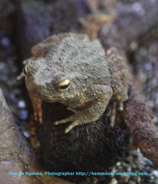 This frog is equipped to hide in plain sight.