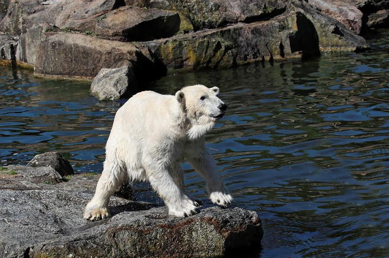 1D3L7380 zoo.jpg
