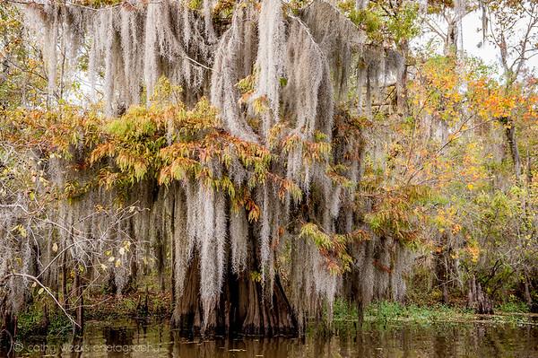 Atchafalaya Basin ~ Louisiana 2013