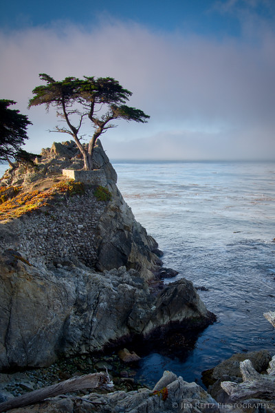 The lone cypress tree at sunrise, as the fog is burning off.