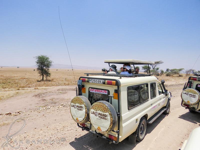 SafariTroop-008.jpg