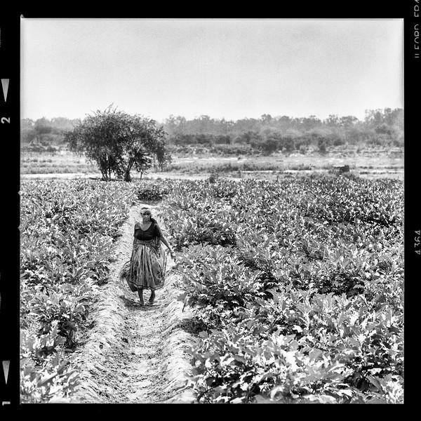 farmer-fieldA.jpg