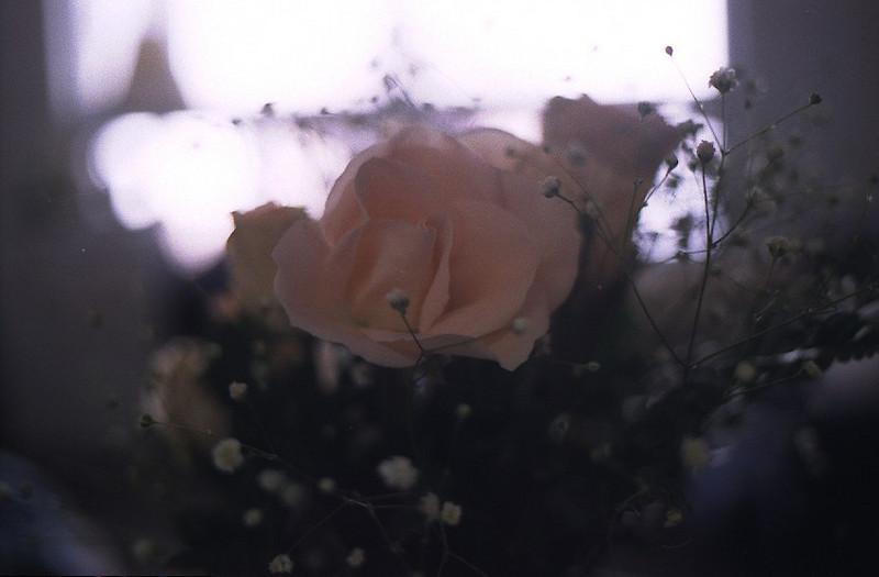 Soft Rose.jpg