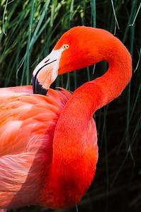 San Diego Zoo January 2014