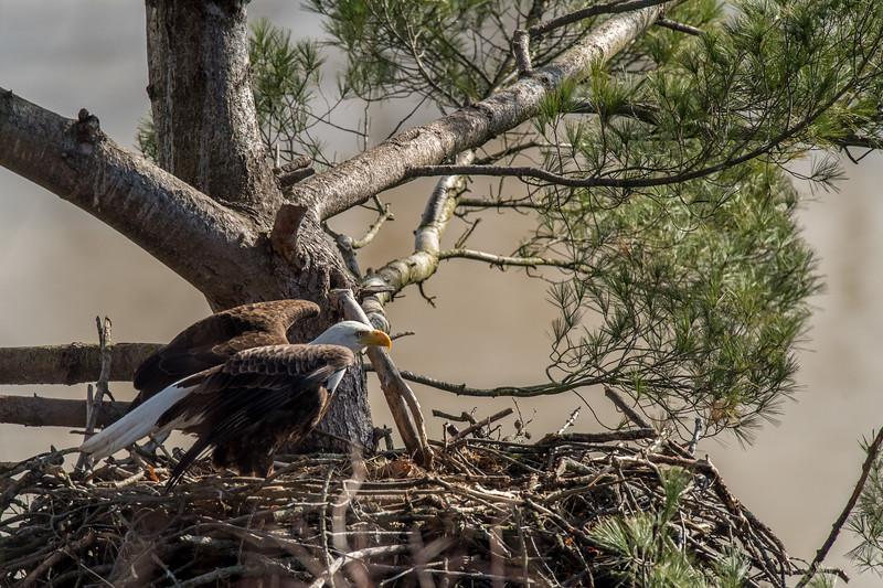 ulster-eagle-97.jpg
