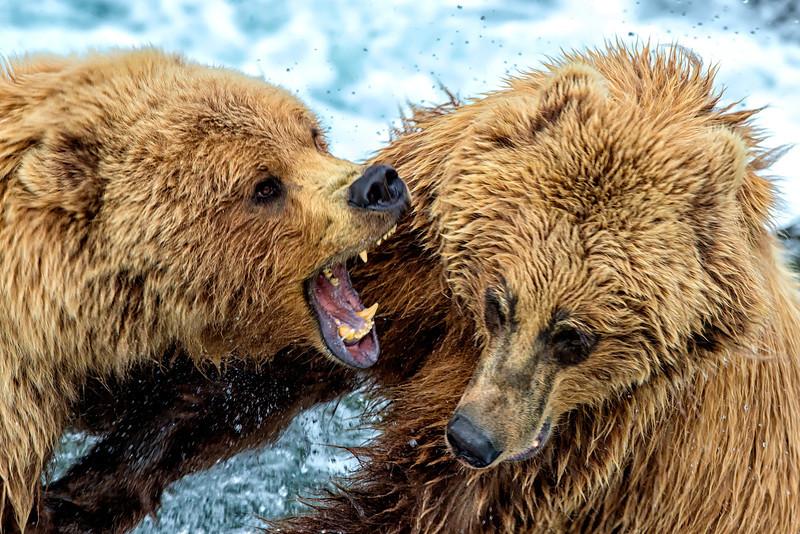 Alaska_2013_FH0T8577-2.jpg