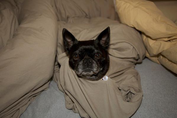 Comforter Stella