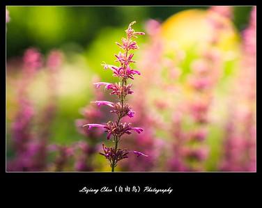 unknown flower-30