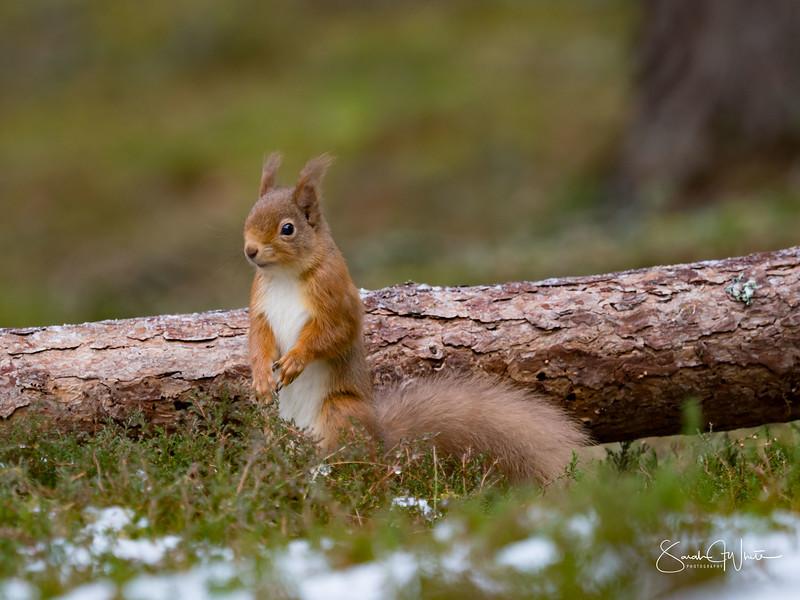 RedSquirrelBootCamp_120217_217.jpg