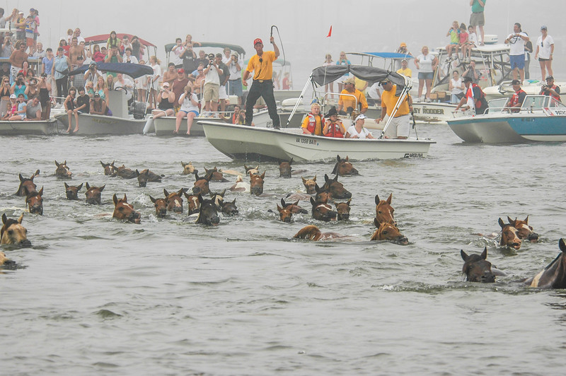 Chincoteague Island Pony Swim #3