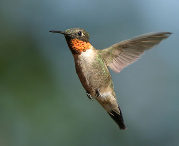 Hummers